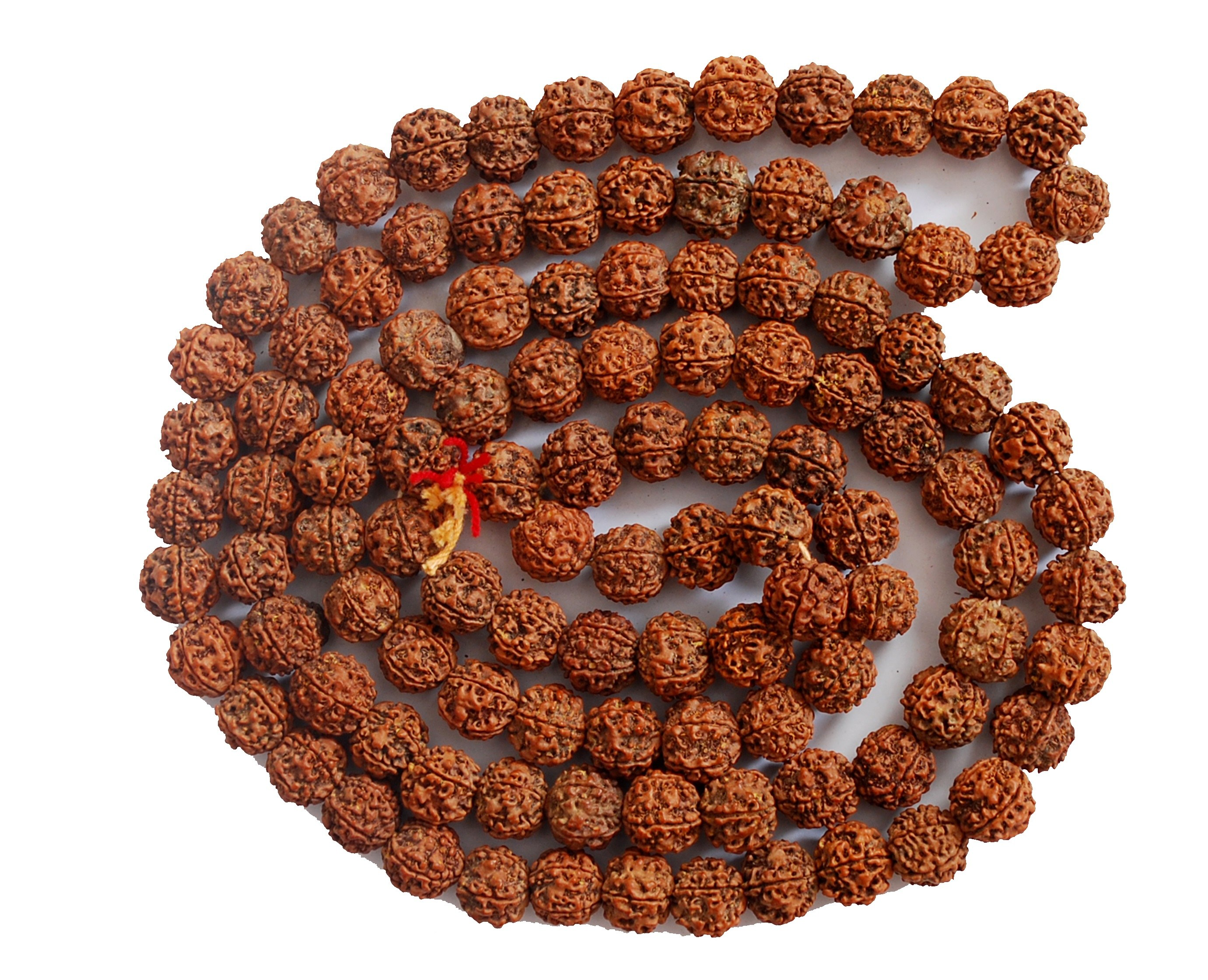 the amazing power of rudraksha Power of rudraksh- the experiment health guru rudraksha tree | amazing kerala - duration: real power of one mukhi rudraksha.